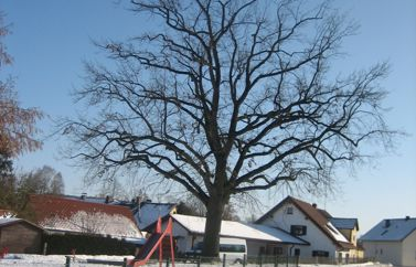 Baumpflege Jawork